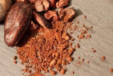Сладкое открытие: новое исследование меняет представление о происхождении шоколада