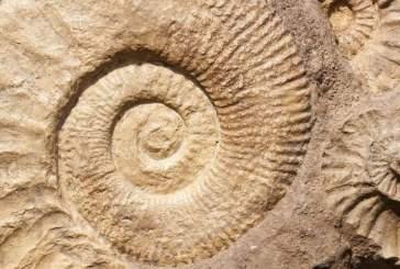 Палеонтологи обнаружили шесть новых видов в Восточно-Африканском разломе