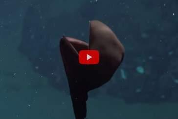 Ученые впервые запечатлели на видео таинственного монстра из океанских глубин
