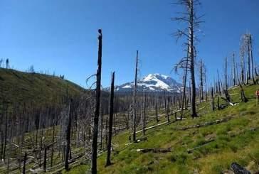 Изменение климата приводит к более сильным пожарам в умеренных лесах