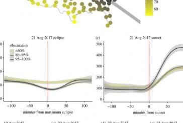 Ученые выяснили степень влияния солнечного затмения на птиц и насекомых