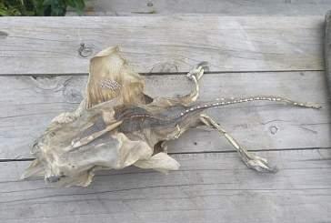 В Новой Зеландии на пляже обнаружены останки таинственного существа