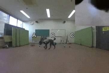 Ученые создали систему дистанционного управления собакой