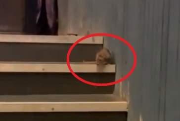 Выбегавшая на сцену крыса во время выступления Дины Рубиной попала на видео
