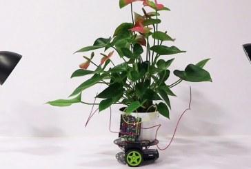 Ученые MIT разработали перемещающееся растение-киборга