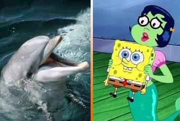 Дельфинам в неволе нравится смотреть мультфильм про Губку Боба