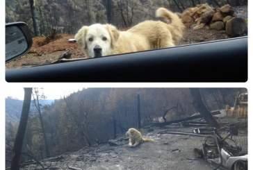 В Калифорнии пес почти месяц ждал хозяев у сгоревшего дома