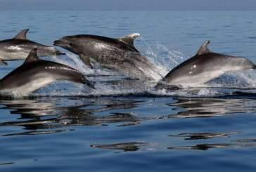 Придирчивые дельфины разборчивы в выборе друзей