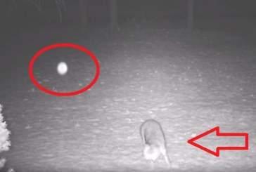 Видео: в США светящийся НЛО напугал дикого лиса