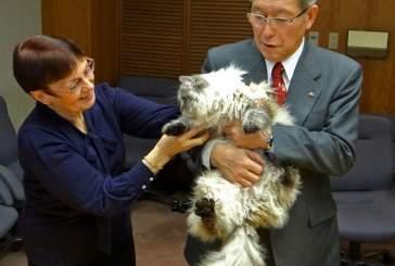 Подаренный Путиным кот вырос и освоил японский язык