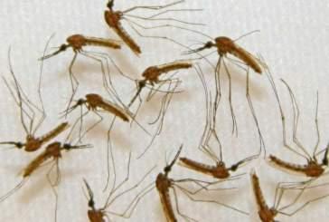 Исследователи обнаружили новый способ борьбы с малярией в печени