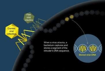 Вирусы колоссальных размеров охотятся на кишечные бактерии человека