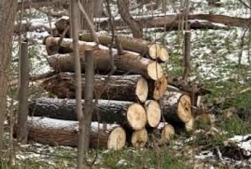 Можно ли производить удаление деревьев в Московской области без разрешения на спил?