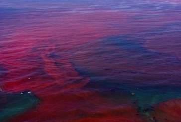 Ученые: в результате глобального потепления изменится цвет мирового океана