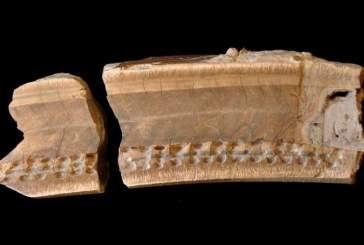 Археологи восстановили последние месяцы жизни древнего ленивца по найденному зубу