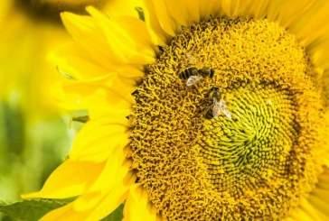 Ученые: пчелы могут решать задачи базовой математики