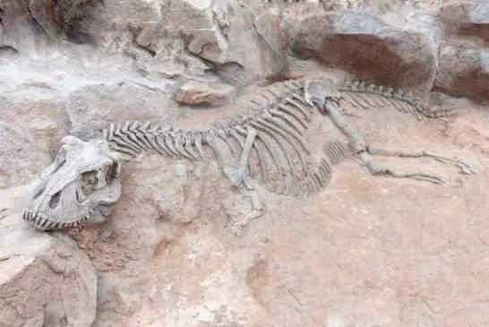 Палеонтологи обнаружили в США тираннозавра размером с собаку