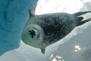 Изменение климата заставляет арктических животных менять свои привычки