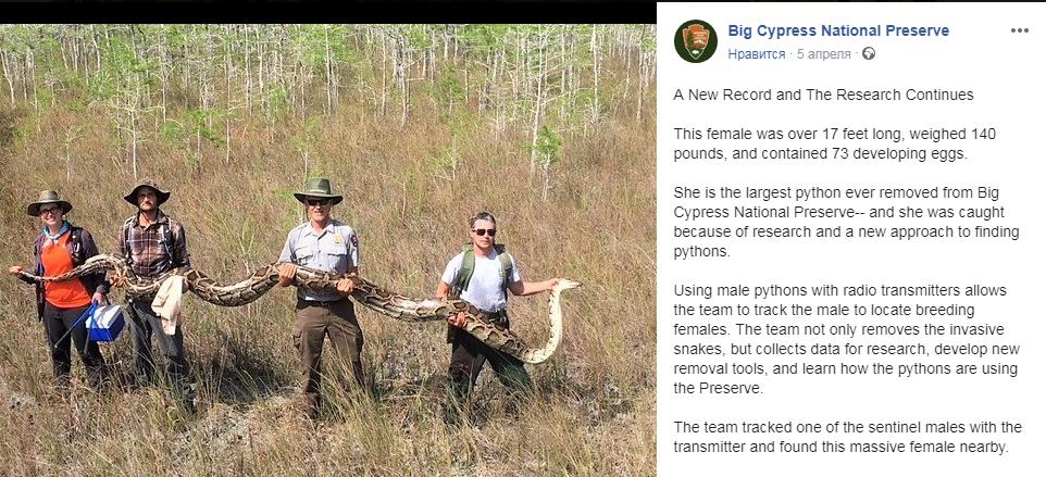 В США в национальном заповеднике поймали гигантского питона