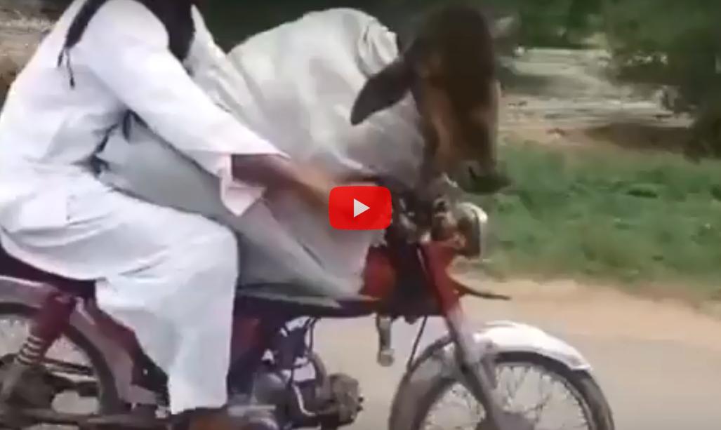 Мотоциклы смотреть онлайн видео от tuganbaev в хорошем