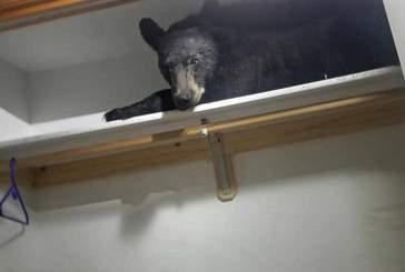 Житель Монтаны обнаружил в своем шкафу спящего медведя