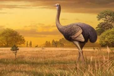 Ученые: гигантские 450-килограммовые птицы когда-то бродили по Европе
