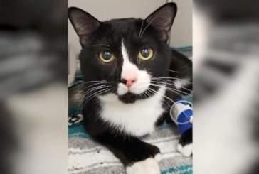 В США кошка пережила 35-минутную стирку в стиральной машине