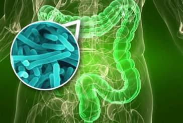 Машинное обучение спрогнозировало изменения в кишечном микробиоме человека