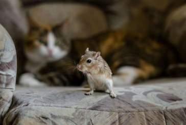 Американский инженер создал не впускающую кошек-убийц умную дверь