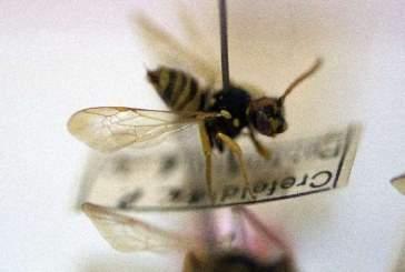 Немецкие наблюдатели за насекомыми бьют тревогу из-за резкого вымирания жуков