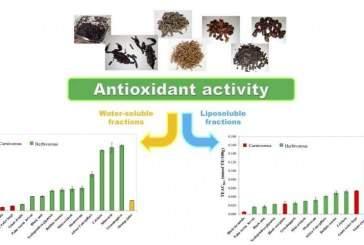 Ученые: кузнечики и шелкопряды обладают аналогичным апельсиновому соку уровнем антиоксидантов