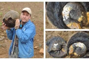 В Костромской области обнаружены раковины огромных древних моллюсков