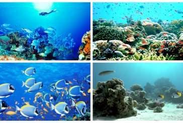 Современная жизнь в океане сформировалась 170 млн лет назад благодаря эволюции