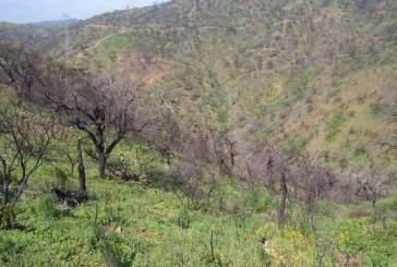 Лесные пожары нарушают опыление растений мотыльками и приводят к их вымиранию