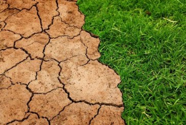 Ученые оценили потенциал деревьев в замедлении глобального потепления в будущем