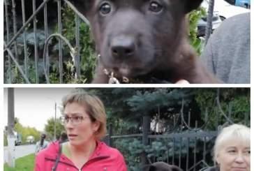 Нижегородка собиралась скормить мужу щенков для лечения туберкулеза