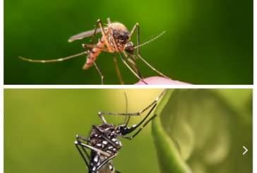 Россиян предупредили о риске эпидемии смертельных лихорадок из-за комаров