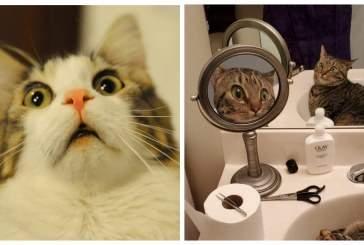 Пользователей Сети рассмешило фото удивленной кошки