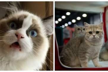 В Китае начнется массовая продажа клонированных котов