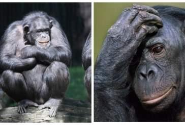 Мозг приматов увеличивался и уменьшался в процессе эволюции
