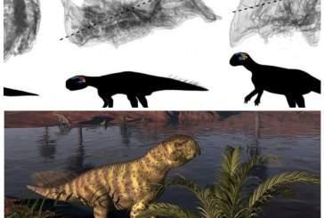 Четвероногие пситтакозавры с возрастом могли переходить на две ноги