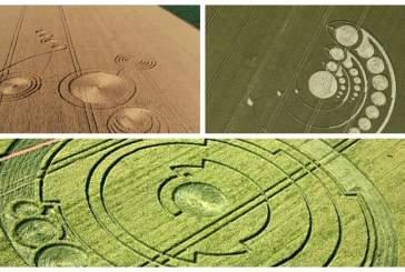Ученые объяснили появление таинственных кругов на полях