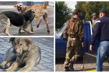 В Хакасии местные жители пригрозили смертью ловцам бродячих собак