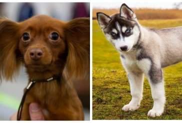 Поведение собак зависит от структуры их мозга