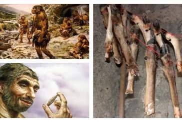 Кости животных использовались древними людьми в виде «консервов»