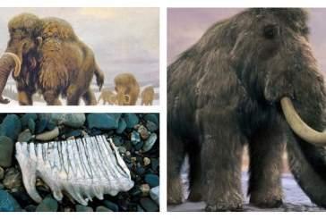 Последние мамонты умерли на острове Врангеля из-за изоляции