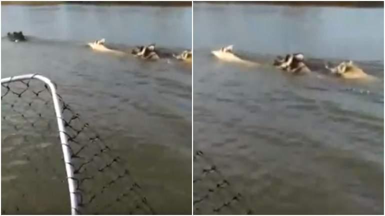 В Астраханской области сняли переплывающих реку кабанов и свинью