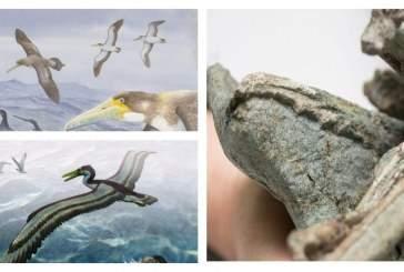 В Новой Зеландии найдены останки древних морских птиц