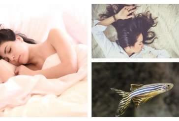 Ученые выявили генетическую основу сна