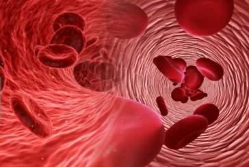 Учёные выяснили самую неуязвимую группу крови для рака